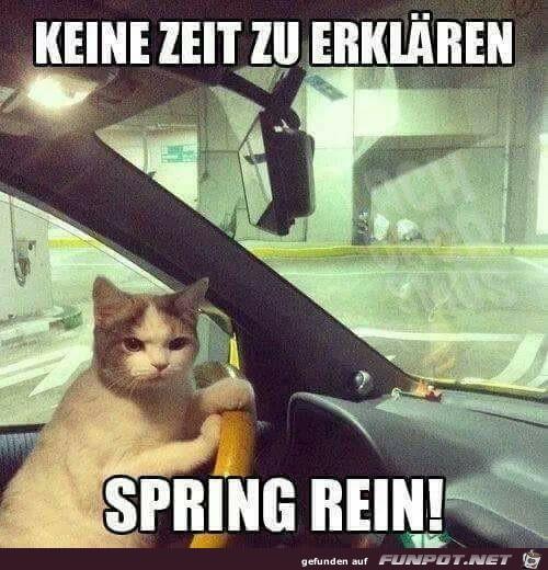 Spring rein