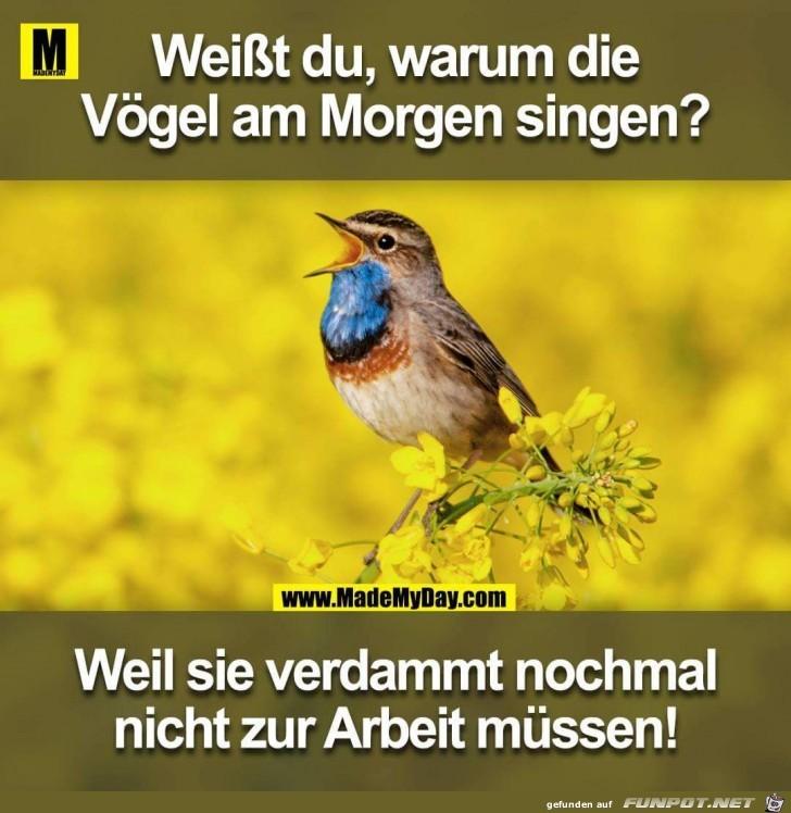 Die Vögel am Morgen