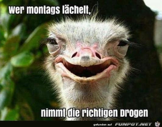 Montags lächeln