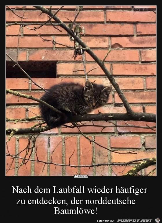 Norddeutscher Baumlöwe