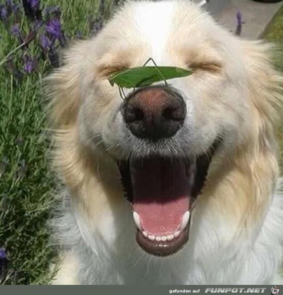 Lachender Hund mit Heuschrecke