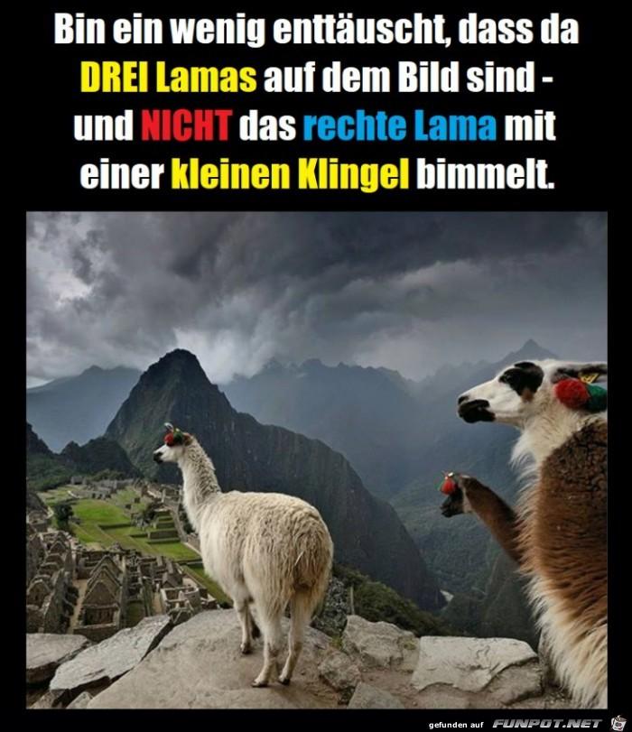 Die 3 Lamas