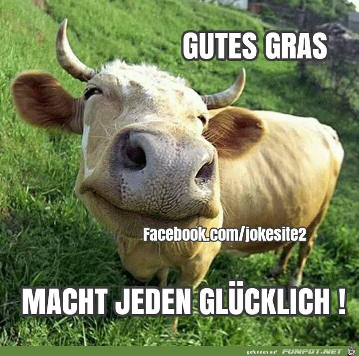 Gutes Gras