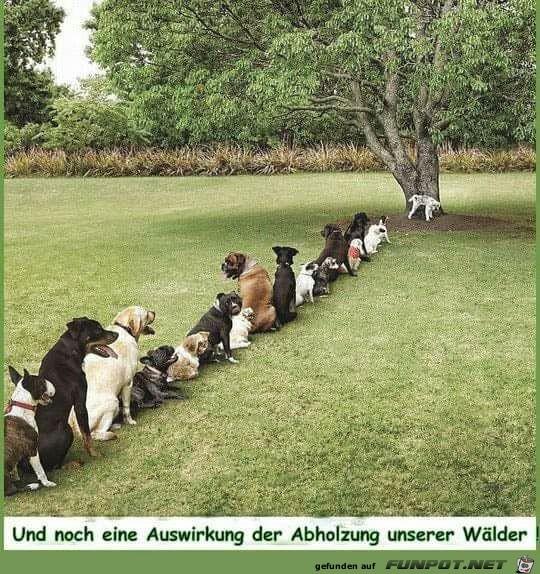 Waldabholzung