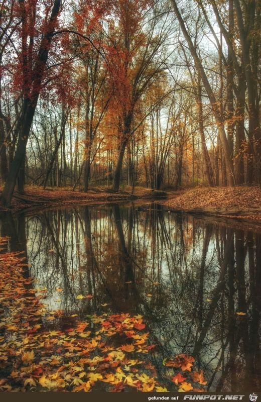 kunstvolle Herbststimmung