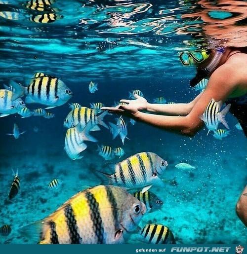 Herrliche Fische