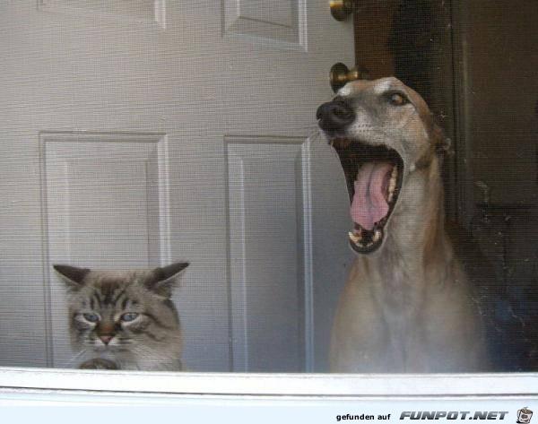 Tiere lustig