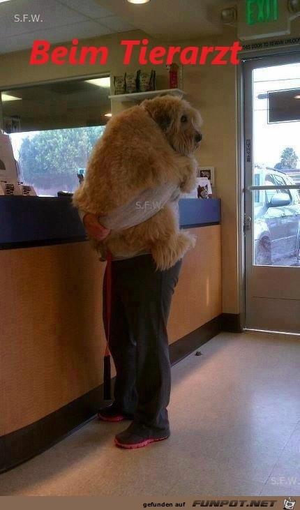 beim Tierarzt