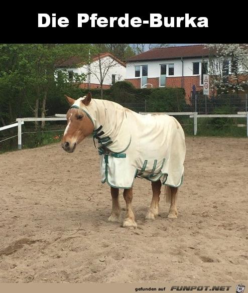 Pferde-Burka