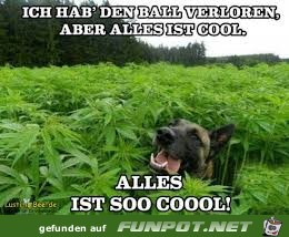 Alles ist so cool