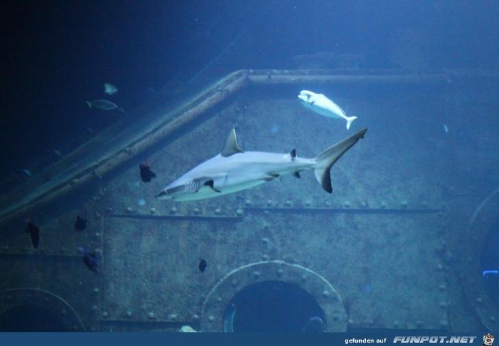 Impressionen aus Hagenbecks Aquarium