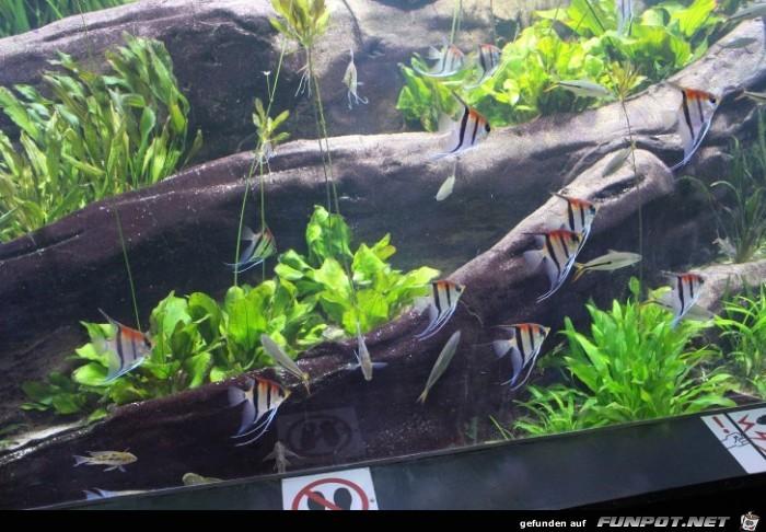 Impressionen aus Hagenbecks Aquarium Teil 2
