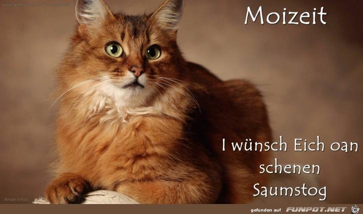 Moizeit