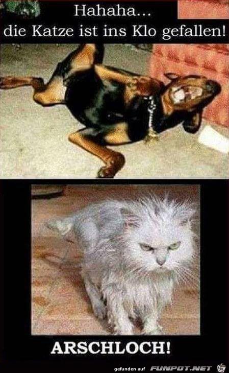 witzige Bilder aus verschiedenen Blogs