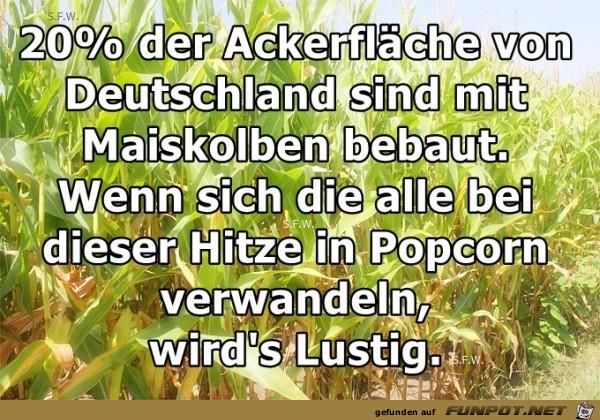 20 Prozent der Ackerfläche