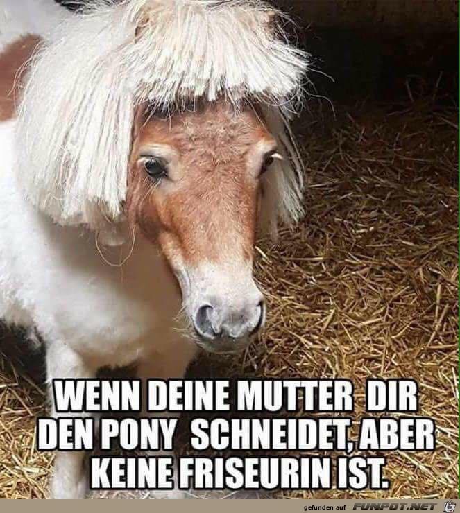 Klasse Pony