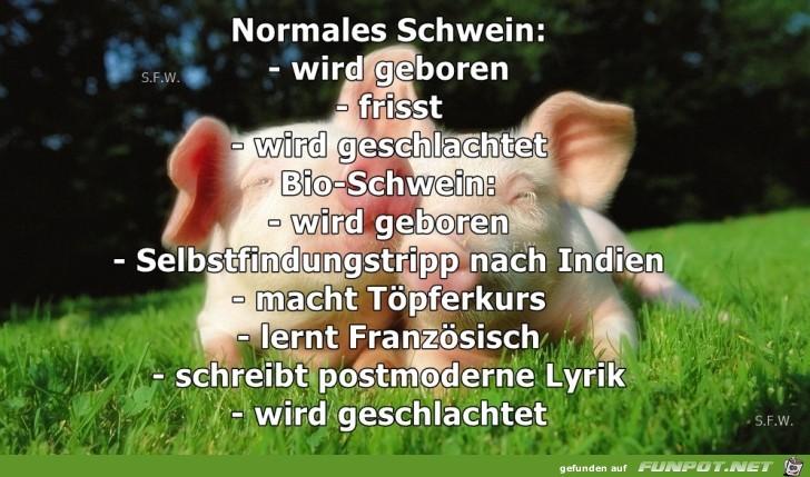 normales Schwein