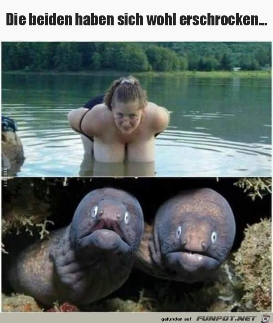 Fische erschrecken