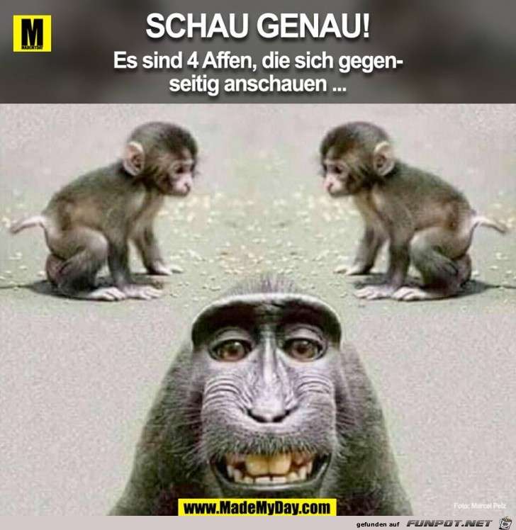 Vier Affen