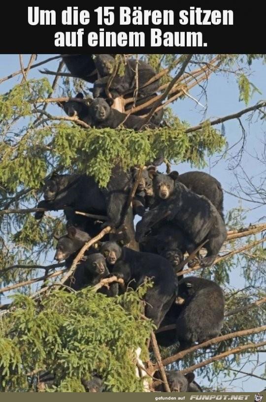 Bärenbaum