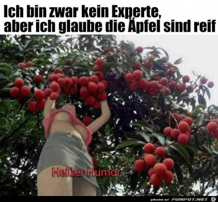 Äpfel sind reif