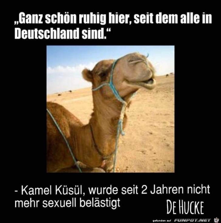 Kamel Küsül