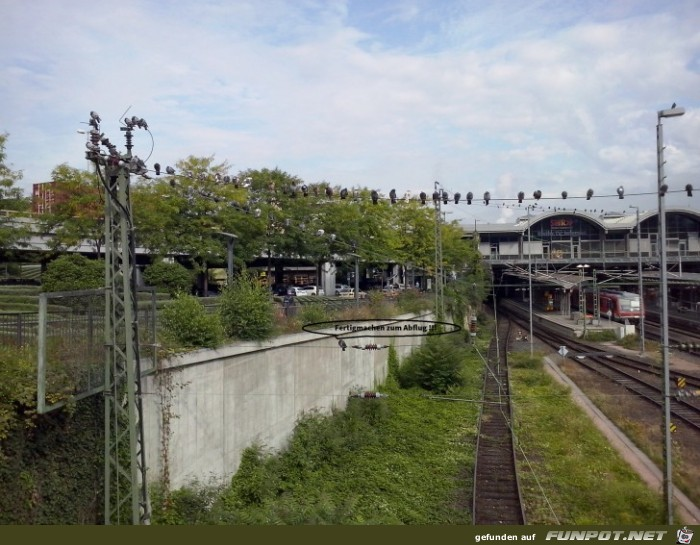 Die Zugtauben v.HBF Mainz