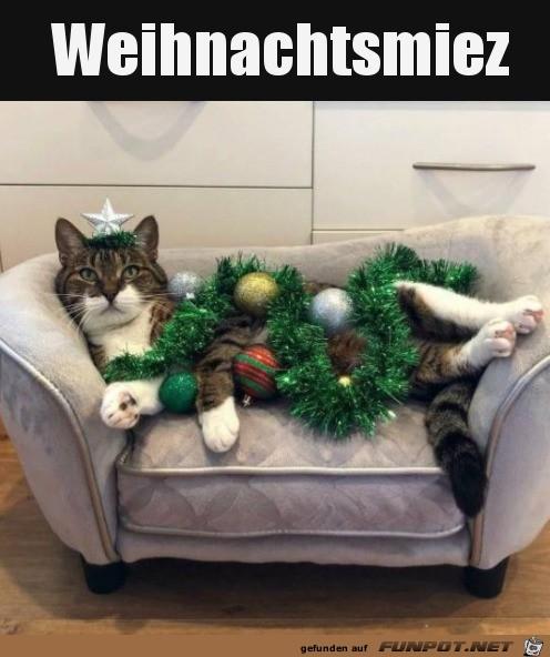 Katze mit Weihnachtsdeko