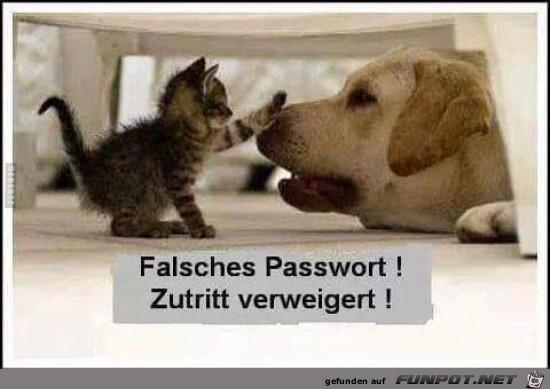 falsches Passwort,.....