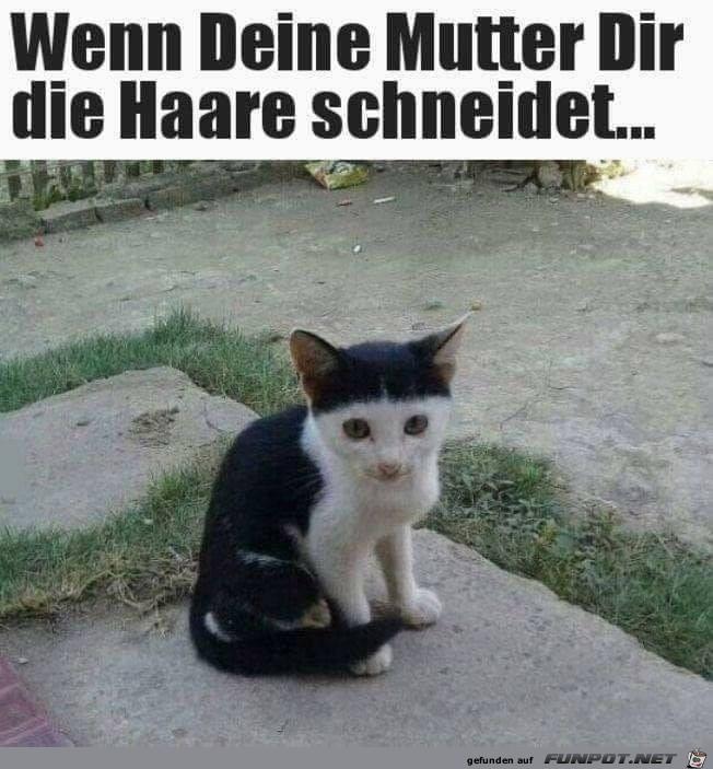 Prinz-Eisenherz-Frisur
