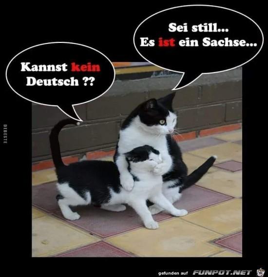 kannst kein Deutsch?......