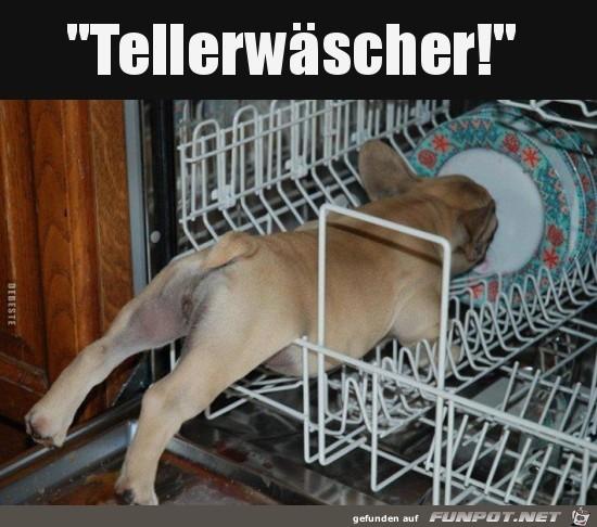 Tellerwäscher..