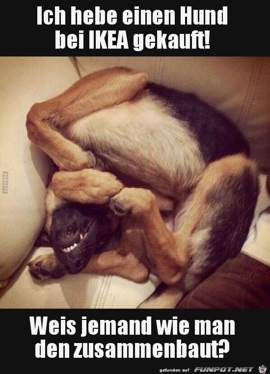einen Hund bei IKEA gekauft..