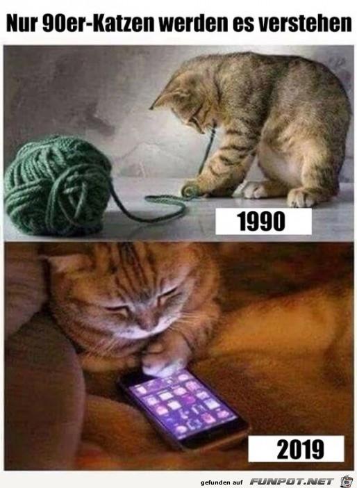 Katzen früher und heute