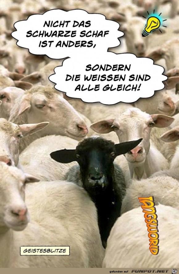 Nicht Das Schwarze Schaf Ist Anders