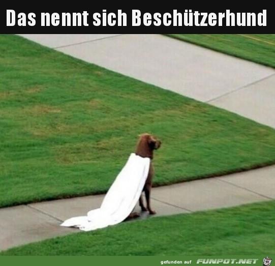 Super-Dog.jpg auf www.funpot.net