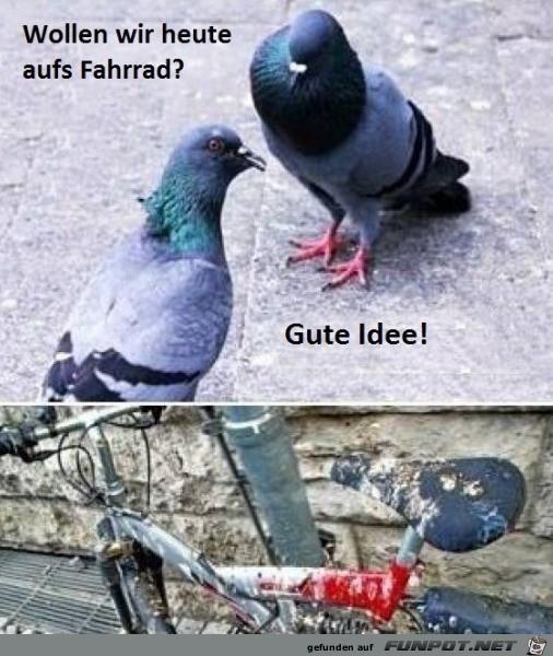 Heute-mal-das-Fahrrad.jpg auf www.funpot.net