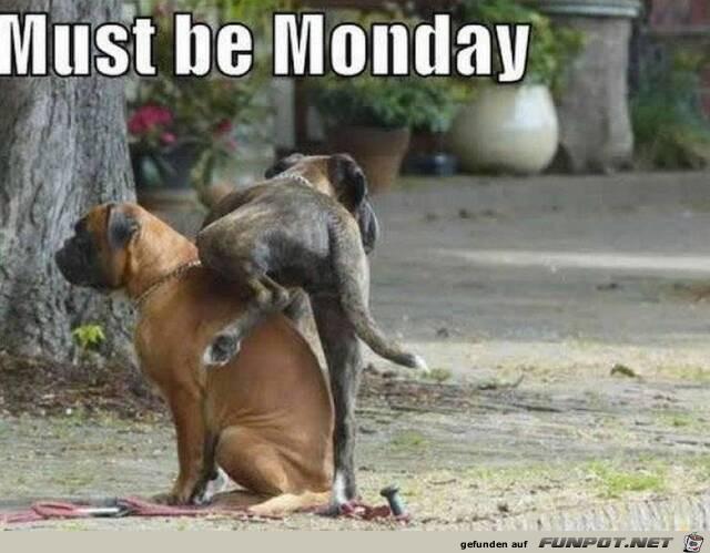 Muss Montag sein