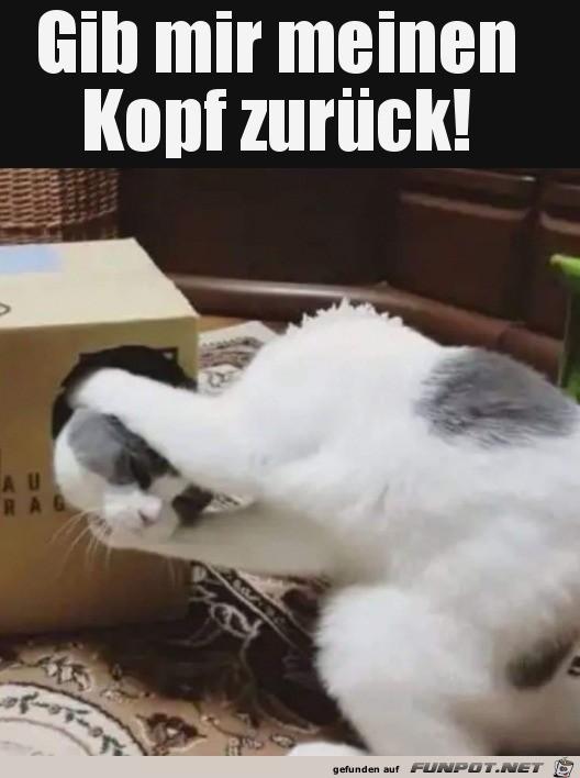 Kopf-her.jpg auf www.funpot.net