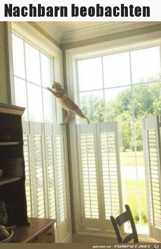 Nachbarn beobachten