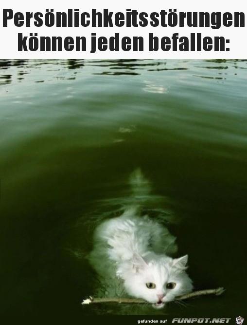 Hund-oder-Katze.jpg auf www.funpot.net