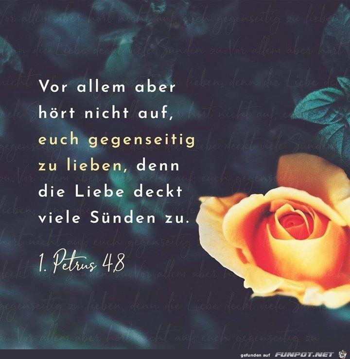 1. Petrus 48