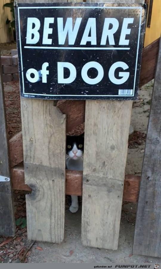Was ist das denn für ein Hund?