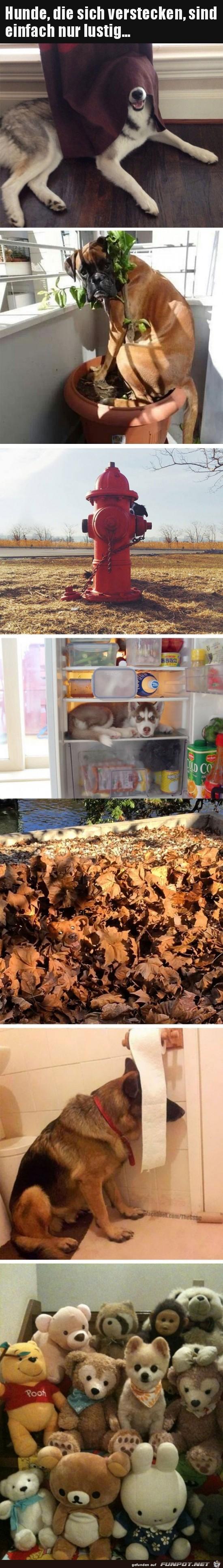 Hunde verstecken sich