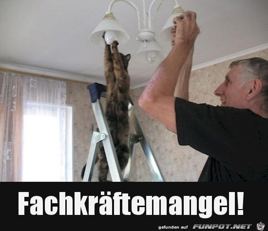 Katze-hilft-mit.jpg auf www.funpot.net