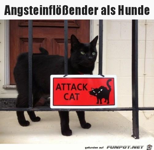 Gefährliche Katze