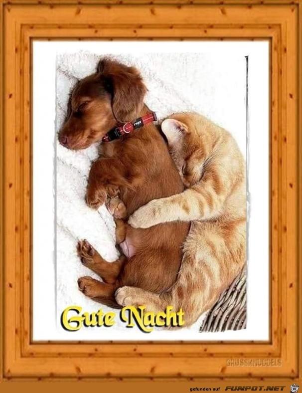 Guten Nacht