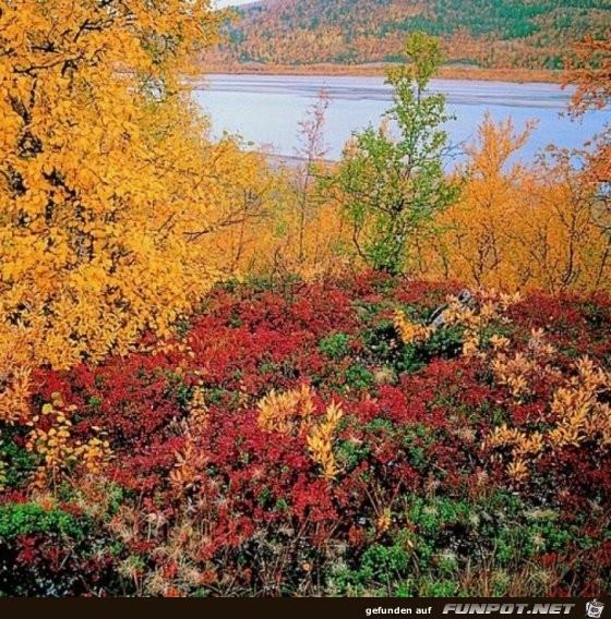 Lappland im Herbst