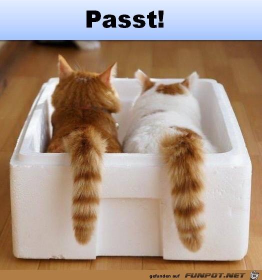 Passt-perfekt.jpg auf www.funpot.net