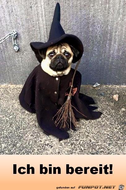 Halloween bin bereit